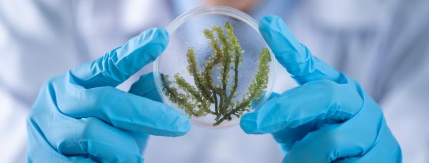 Wissenschaftler mit Petrischale
