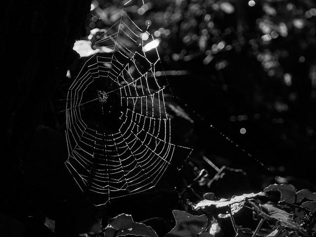 Eine Woche im Spinnennetz
